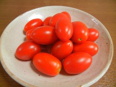 ある日のトマトの収穫on粉引皿
