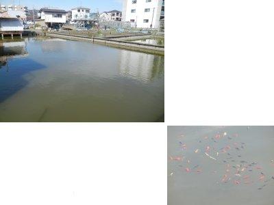 堀口養魚場