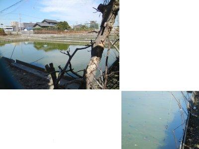 橘川養魚場
