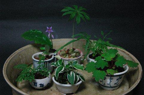 090803ミニ鉢(含む、ぐい吞み風鉢)