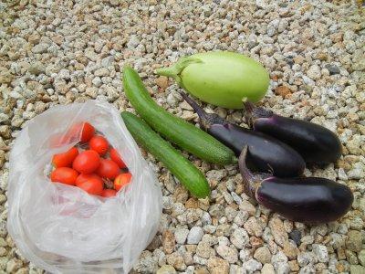 畑の収穫品
