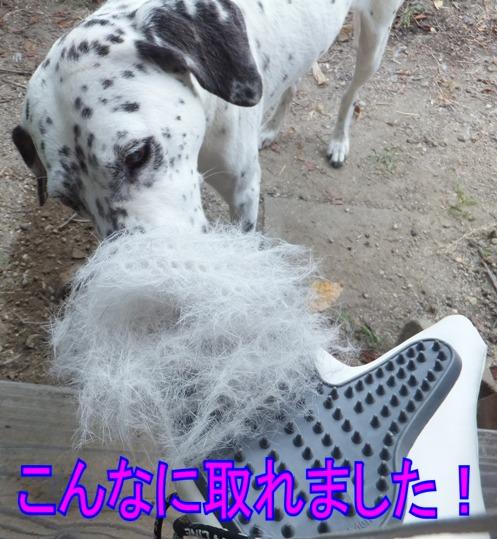 blog0809_090341.jpg