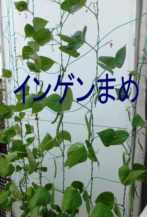 blog5899.jpg