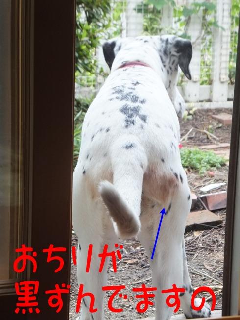 blog_0705_162939.jpg
