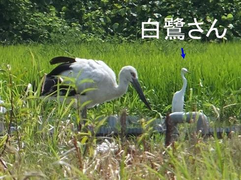 blog_0727_103747.jpg
