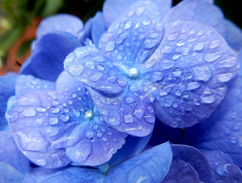 150627花と雨粒1