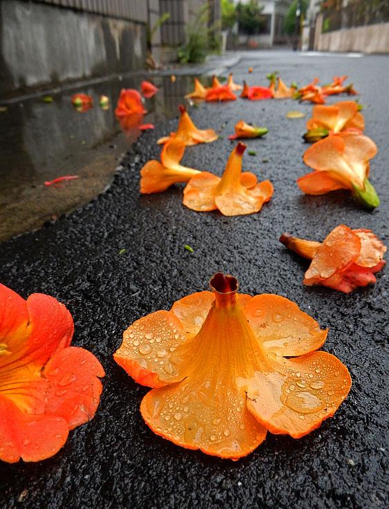 150627花と雨粒8