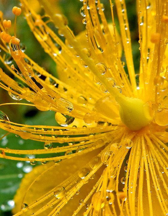 150627花と雨粒3