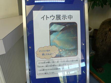 minamifurano006_R.jpg