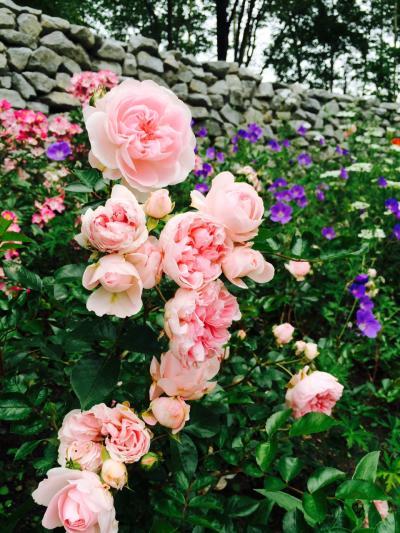 2015.7.9.ガーデンショ1