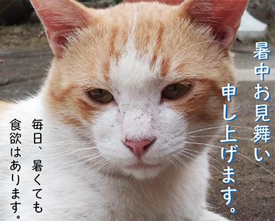 暑中見舞い猫