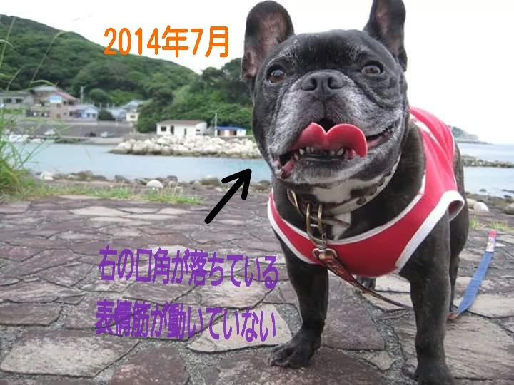 2015-08-03-08-02-38_deco[1]