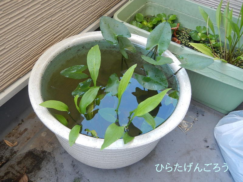 plant-pot①