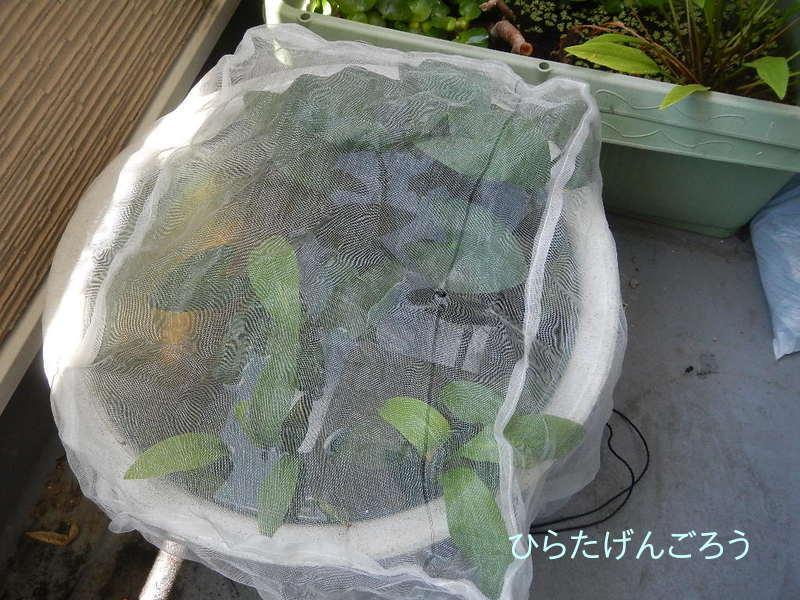 plant-pot②