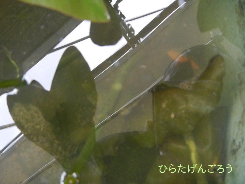 plant-pot③