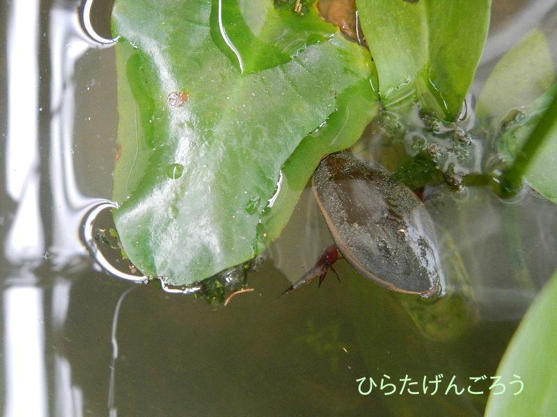 plant-pot-Goromi③
