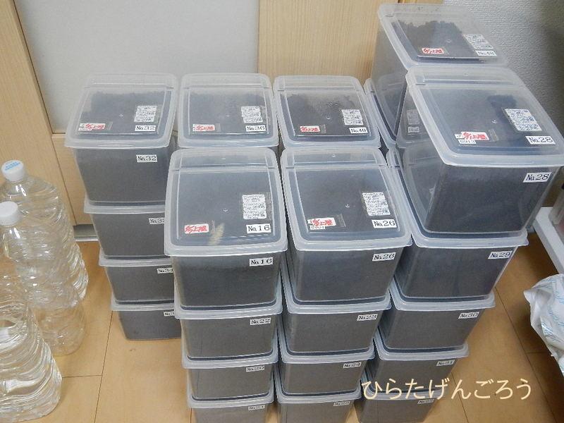 Cj-box before-adult①