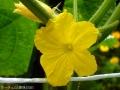 黄色と緑色