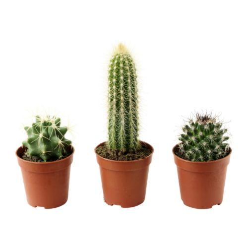 cactaceae-bo-zhi-e__67421_PE181264_S4.jpg