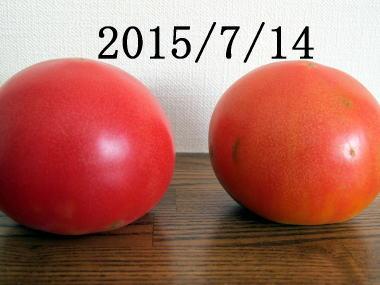 mm379.jpg