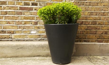 Pot-plant-006.jpg