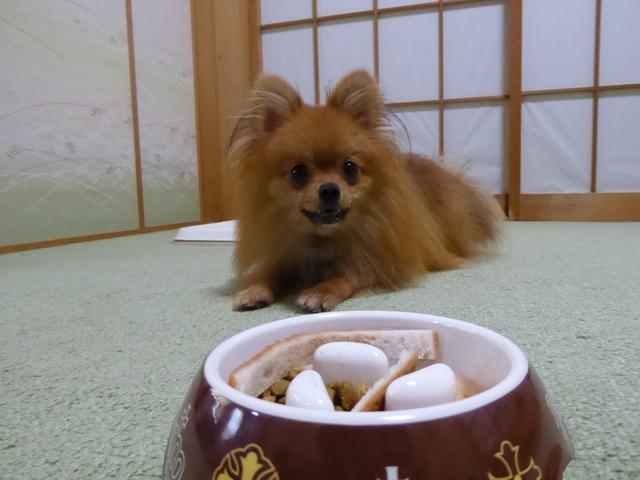150718ポン太朝食②