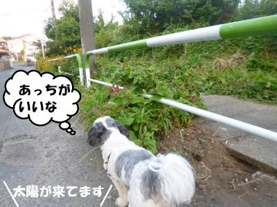 夏朝の散歩