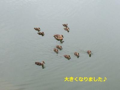 129_convert_20150705230146.jpg