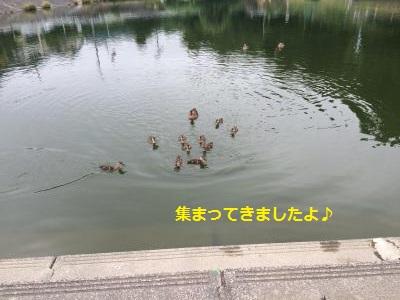 130_convert_20150705230123.jpg