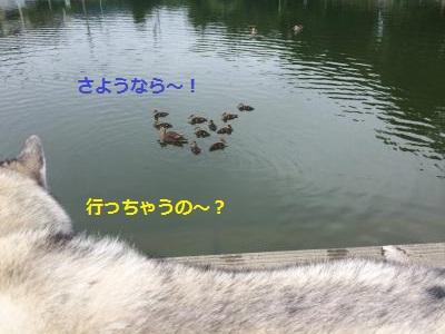 133_convert_20150705230023.jpg