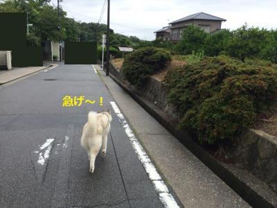 174_convert_20150716225732.jpg