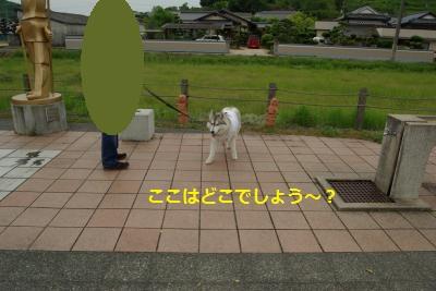 IMGP7793_convert_20150530160326.jpg