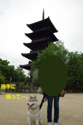IMGP7810_convert_20150602151907.jpg