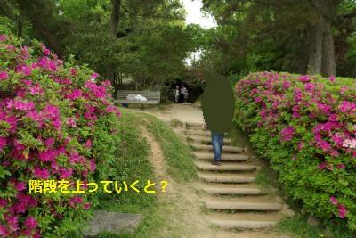 IMGP7817_convert_20150602152234.jpg