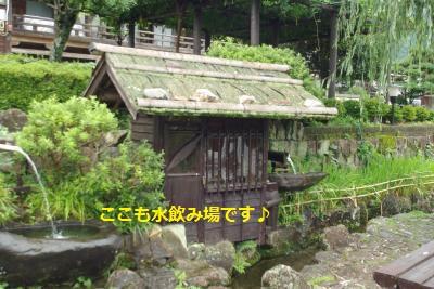 IMGP8158_convert_20150723193638.jpg