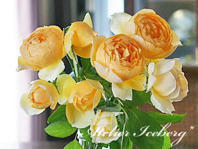 rose2015_162.jpg