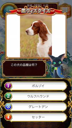この犬の品種は何?