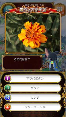 この花は何?