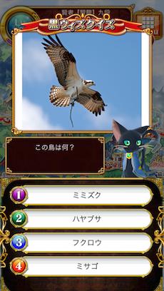 この鳥は何?