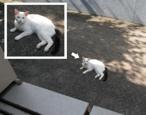 ネコ発見!その2