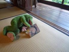 frog-800.jpg