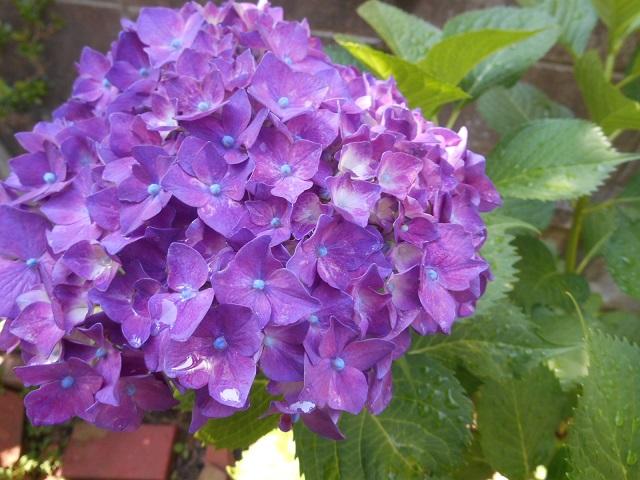 blog3_20150620201416d81.jpg