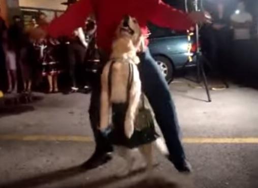 犬のしつけを極めると、ワンコはここまで賢くなる動画