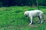 ウシか?草ばっかり食べて