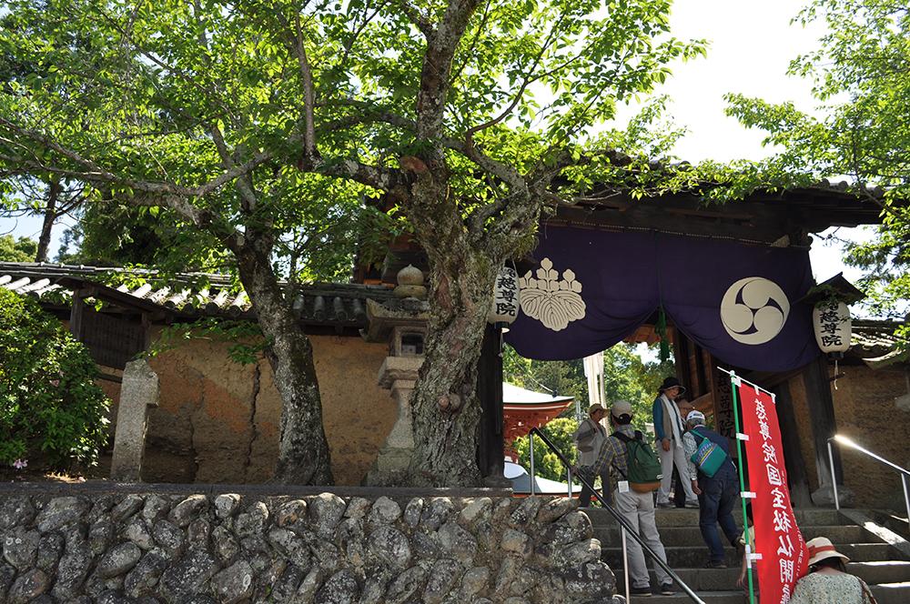 sekaiisankudoyama (5)