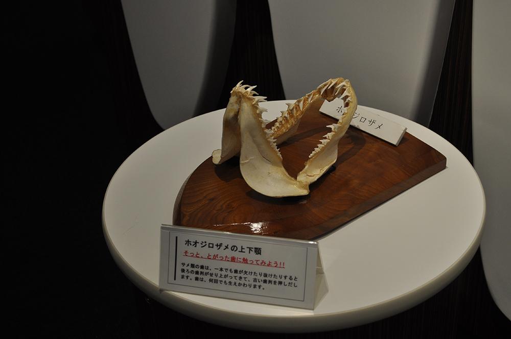 nagoyaske (27)