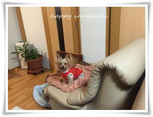 mini3IMG_2663-20150804.jpg