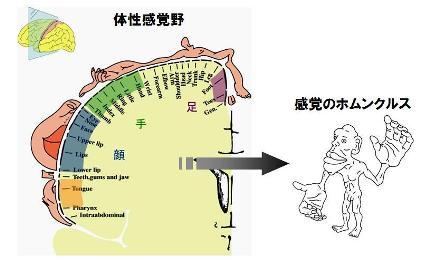nou kyokuzai