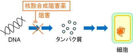 kyoyzai-dd6.jpg
