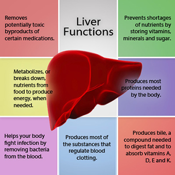 liver-disease-s3a-liver-functions.jpg